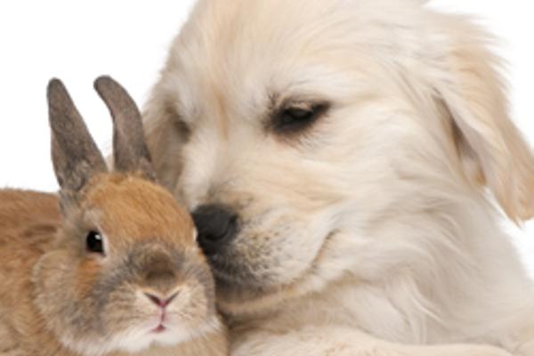 Cane e coniglio domestico possono coesistere? E come?