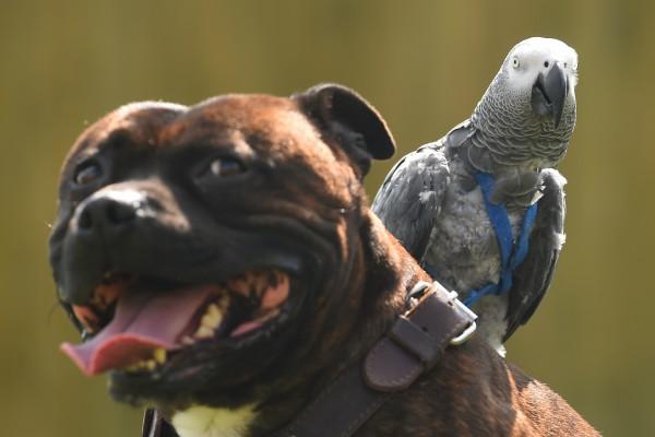 Cane e pappagallo possono coesistere? Ecco cosa sapere