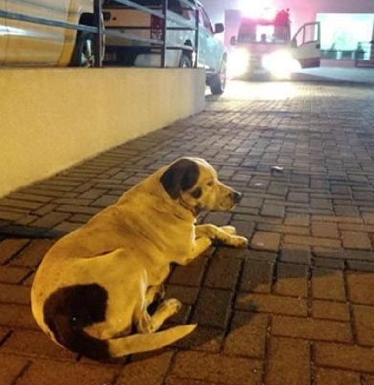 cane-fifo-ospedale