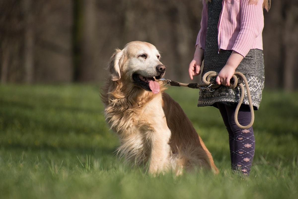 Il cane ha mangiato veleno per topi, come intervenire subito