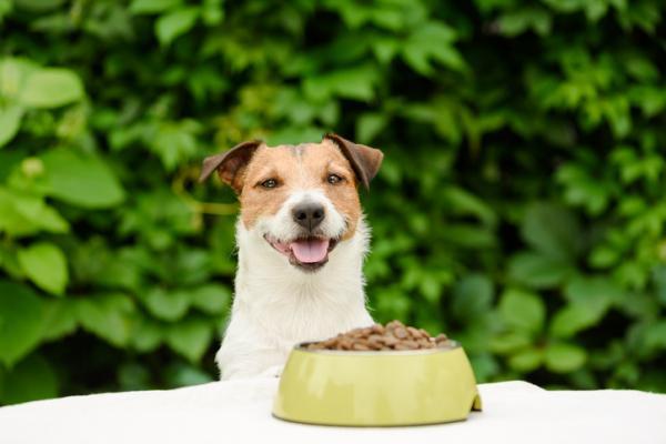 cane e ciotola di croccantini