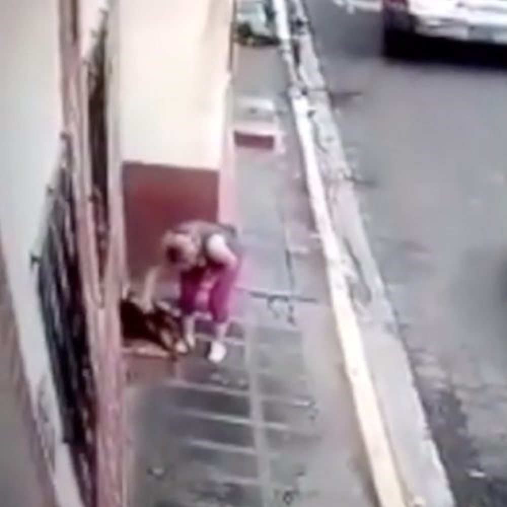 cane-randagio-salvataggio