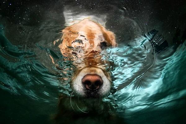 naso del cane in acqua