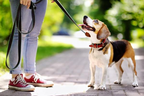 Il cane si accoppia con la gamba: come farlo smettere