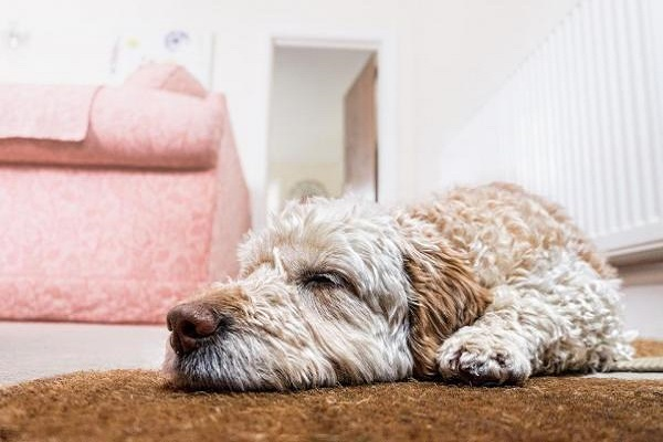Come creare uno spazio per il cane stressato