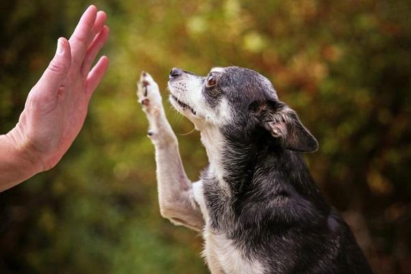cane dà il cinque