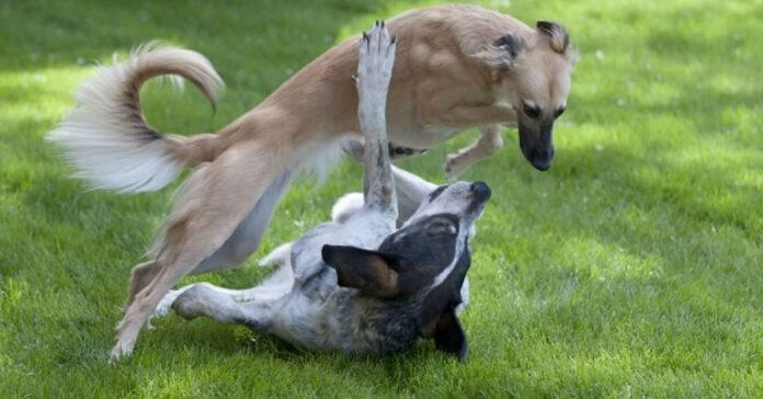 cane che corrono
