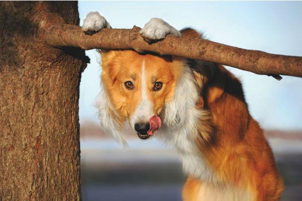 cane sul ramo