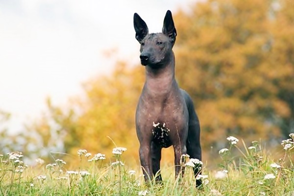 5 razze di cani legate a strane leggende, misteriose e oscure