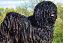 cane con il pelo strano