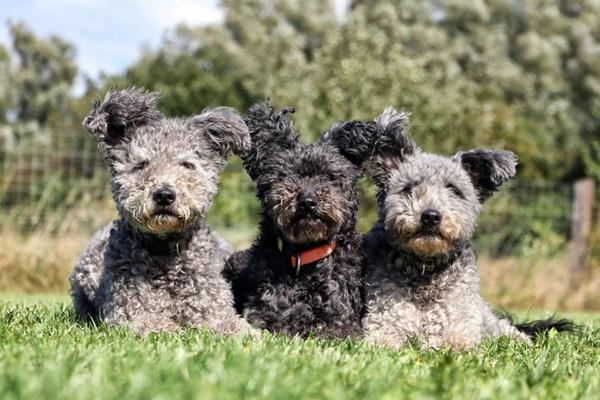 tre cani carini