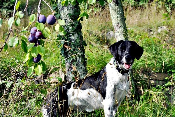 cane tra gli alberi