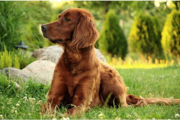 Cani e stevia: è sicura o crea dei problemi alla loro salute?