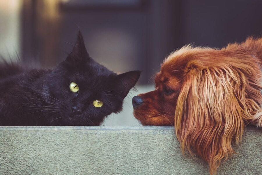 cane guarda un gatto