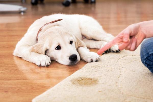 Età di apprendimento del cane: quando (e quanto) può imparare