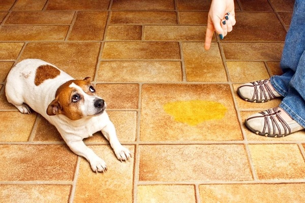 rimproverare un cane