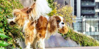 cane che fa pipì sulla pianta