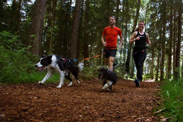 corsa con cani nel bosco