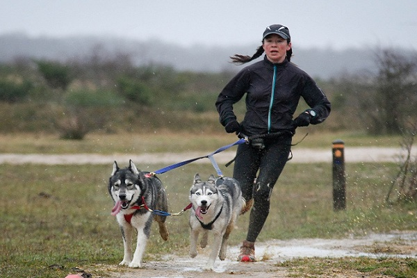 corsa con cani husky