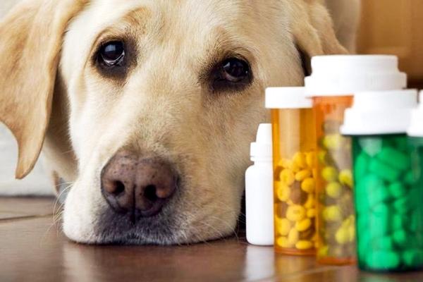 cane con le pillole