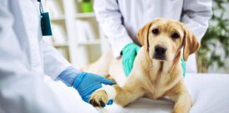 cane con i veterinari