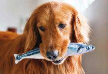 cane con un pesce in bocca