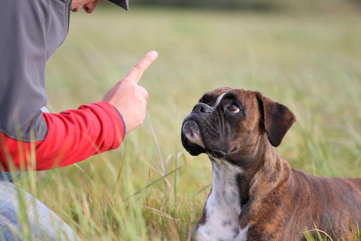 comando stai da insegnare al cane