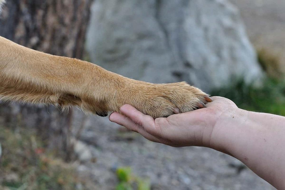 zampa del cane e mano umana