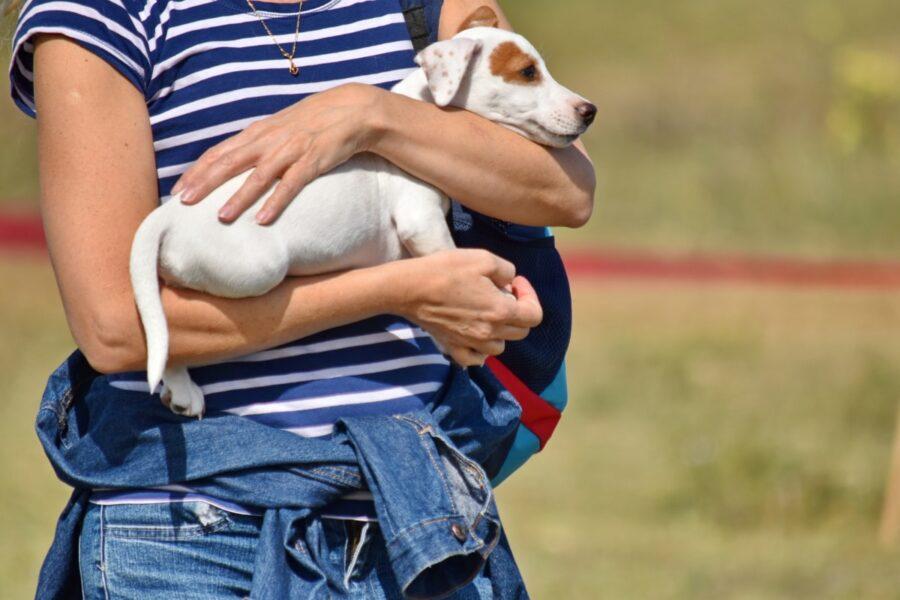 cane fra le braccia della proprietaria