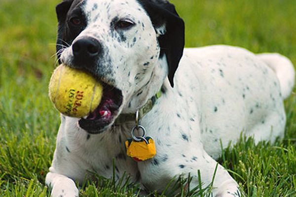 I cani capiscono se indichi qualcosa (o qualcuno)?