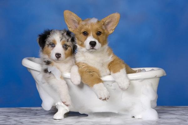 cani dentro una vasca