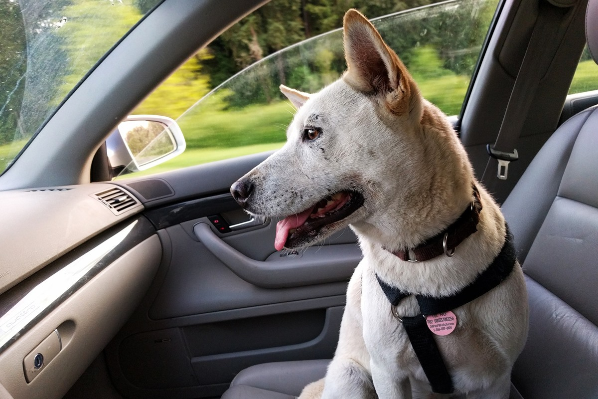 Consigli sulla sicurezza per chi ha un cane: eccone 10