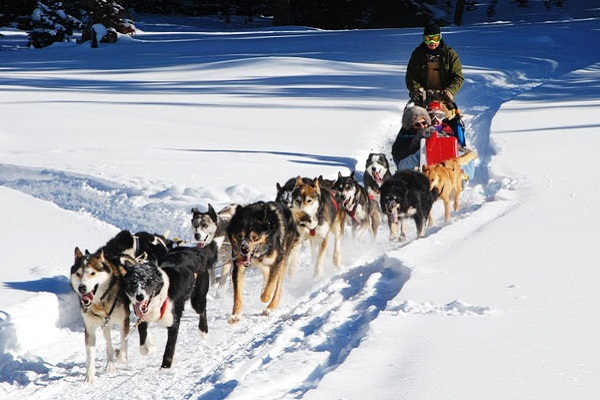 squadra di cani da slitta