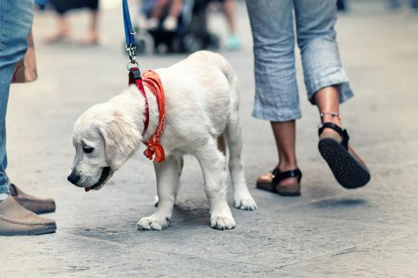 cucciolo di cane lecca tutto