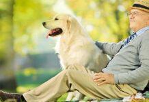 cane e uomo anziano