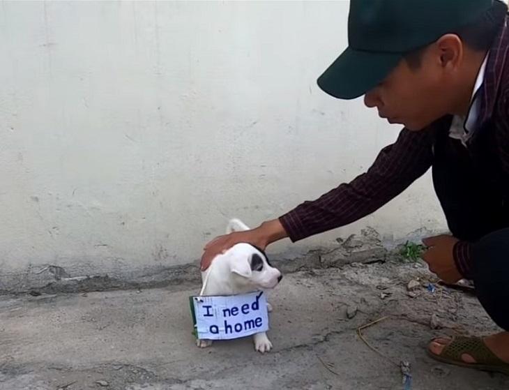 cucciolo-cartello