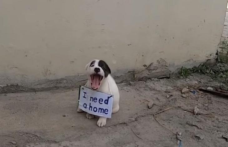cucciolo-messaggio