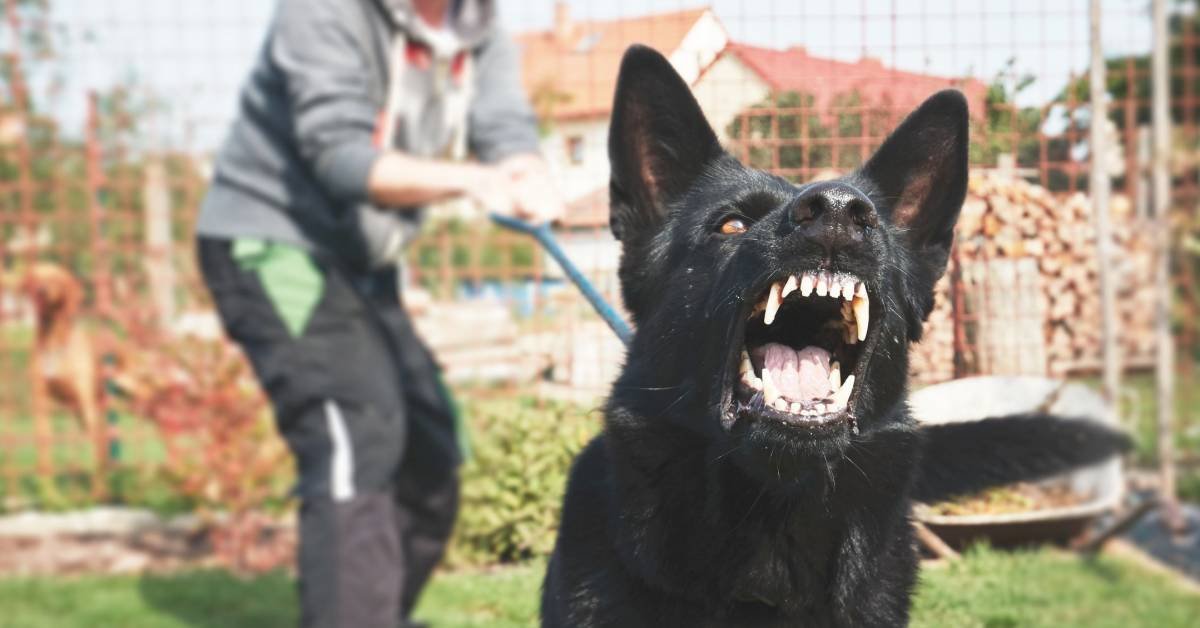 cani a non combattere