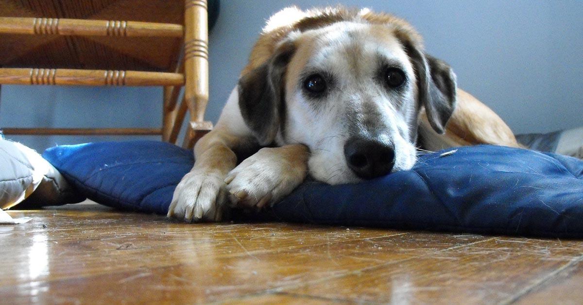 Tricofitosi del cane: tutto ciò che bisogna sapere su questa malattia