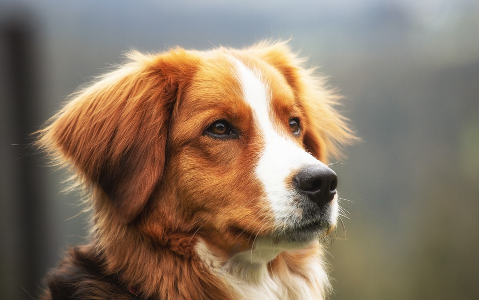Cane di segno capricorno: caratteristiche, temperamento