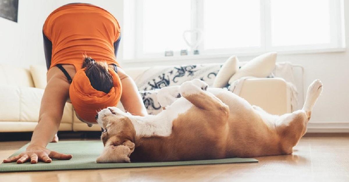 meditazione per cani