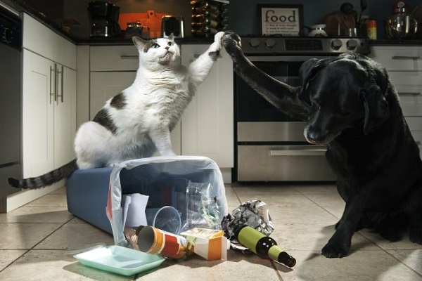 cane e gatto in cucina