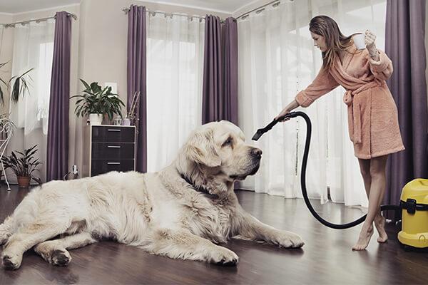 aspirapolvere e cane