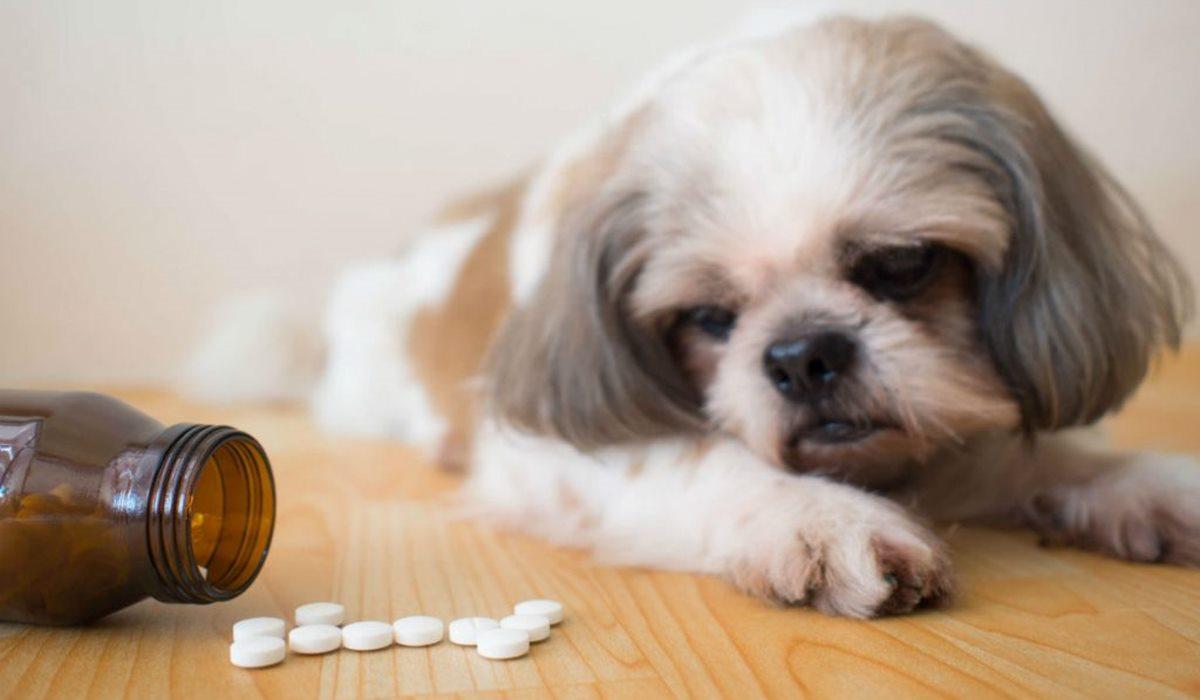 Fortekor per cani: cos'è, a cosa serve e tutto ciò che bisogna sapere