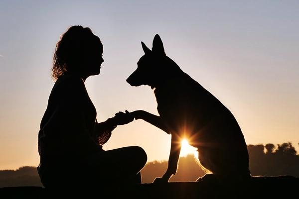 ragazza e cane che si stringono la zampa