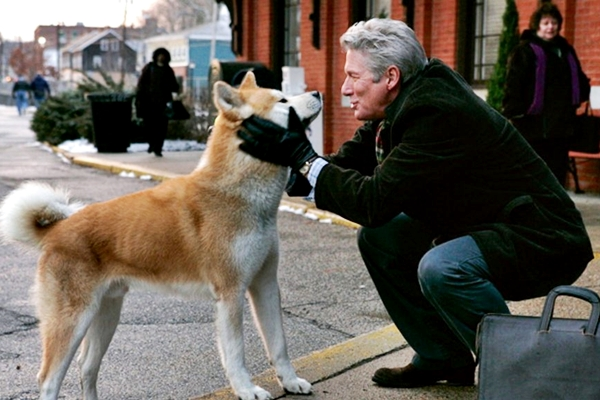 Frasi sui cani: le più belle da dedicare a Fido
