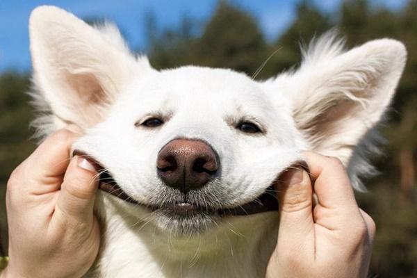 fare sorridere il cane