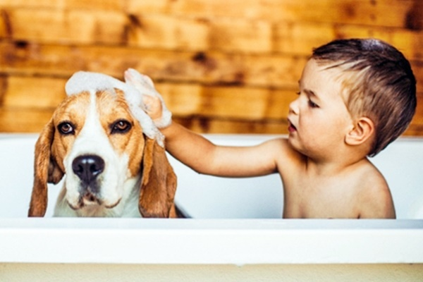 bimbo fa il bagno al cane
