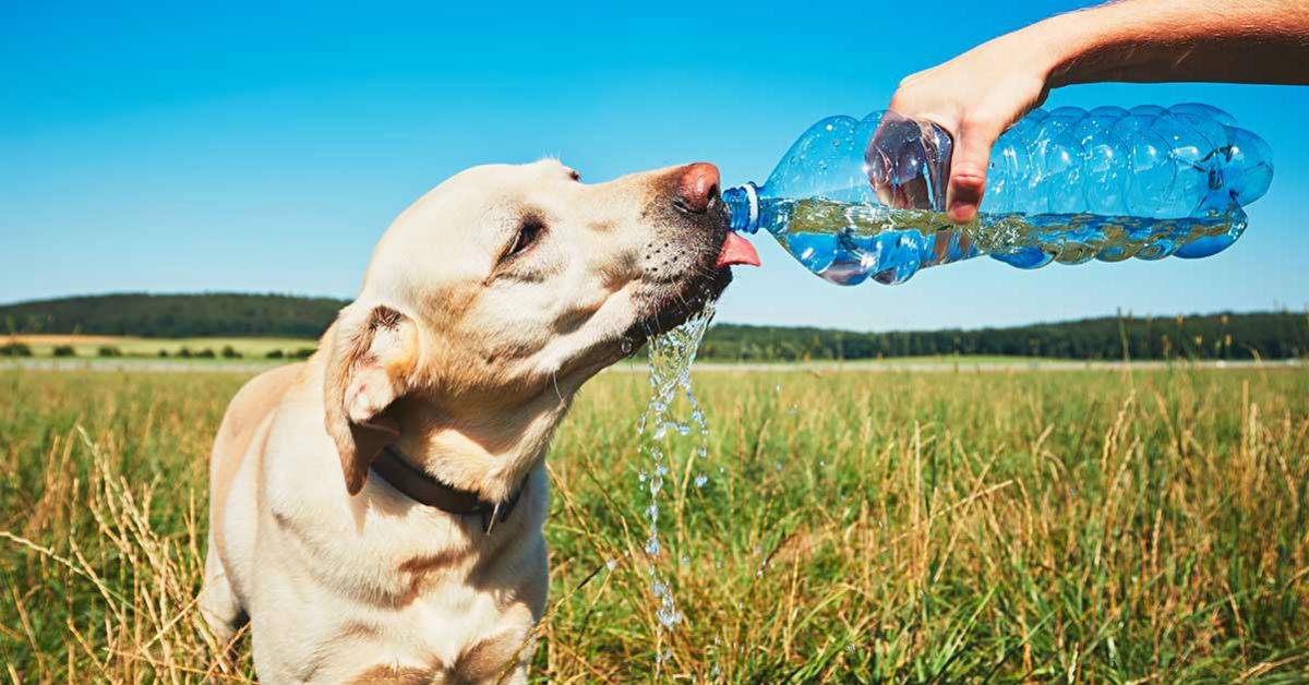 cane che beve dalla bottiglia