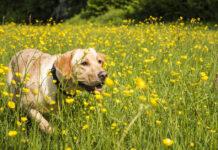 cane giardino giglio